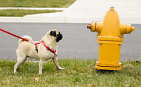 dog-with-fire-hydrant